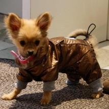 Raincoat brown/bronze