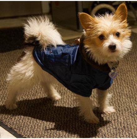Igloo Blue cozy winter jacket