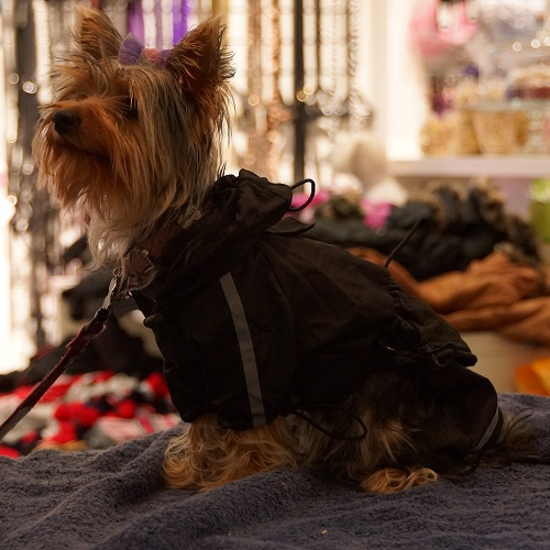 Black reflective raincoat 4 legs