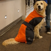 Dog coat black/orange