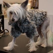 Long hair grey fur jacket