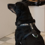 Black Soft Leather Harness Cool