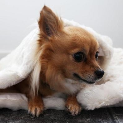 White fur blanket w black lining