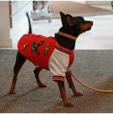 Dog racing coat Red