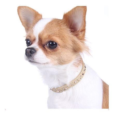 Collar/Leash Set beige w Crystals