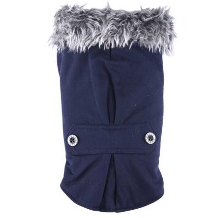French Bulldog/Pug Blue coat w fur collar