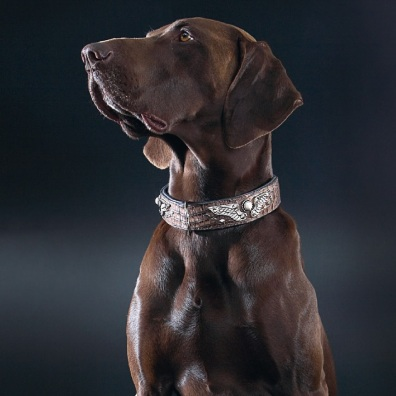 Collar Spitfire Reptile - Brown Leather