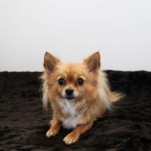 Brown fur blanket w black lining