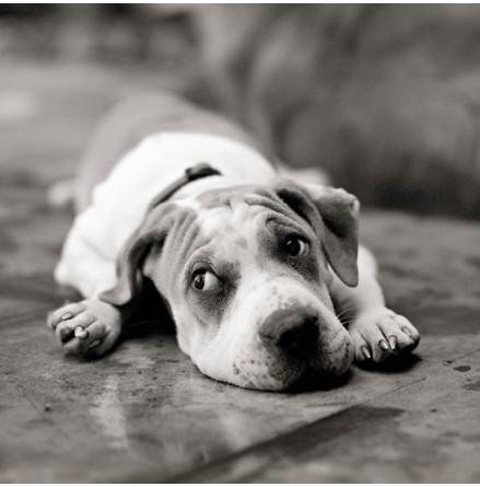 Sad Dog - I´m Sorry