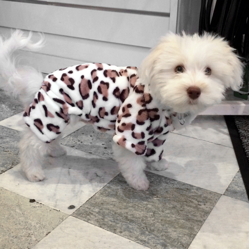 Cuddly Cosy 4-legged Suit White leopard