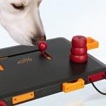 Dog activity Move to Win