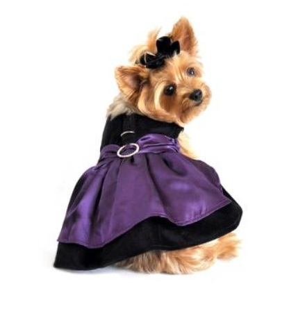Purple Velvet Dress w leash