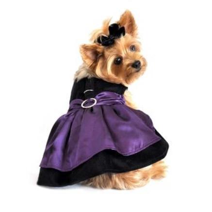 Purple Velvet Dress w leash