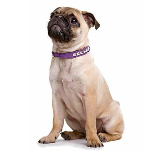 Necklace Nappa w soft studs - Purple