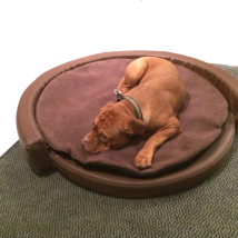 Pet sofa Art-leather Brown/Brown