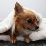 White fur blanket w white lining