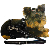 Tiny - Puppy Set nylon harness & Leash - Black 20-29cm x 10mm