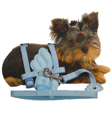 Tiny - Puppy Set nylon adjust. harness & Leash 20-29cm x 10mm - Angel Wings Blue