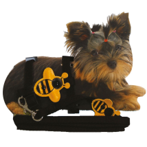 Tiny - Puppy Set nylon adjust. harness & Leash 20-29cm x 10mm - Bumblebee