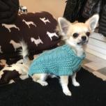 Winnipeg Sweater - AQUA