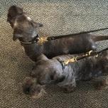 Brooklyn Leather Collar Brass w Soft Studs - Black