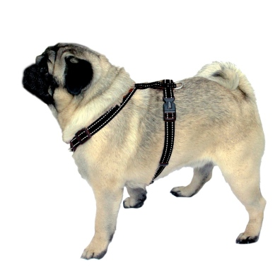 Pug/Bulldog Harness w Reflex - Black