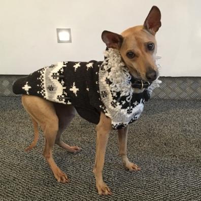 Cambridge Wool Sweater w Hood - Grey/White