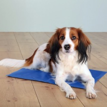 Cooling Mat Through Body Contact- Blue