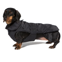 Dachshund Trench Coat w Removable Lining - Brown