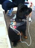 Cool Black Leather Harness