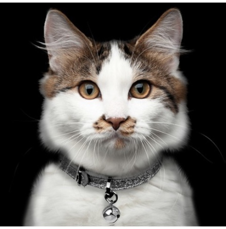 Cat Collar Stardust - Titan  Length:22-27cm Tot:30cm Width:1cm