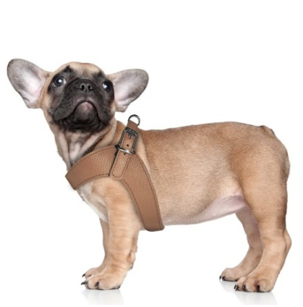 Dandy Real Leather Adjustable Harness - Camel
