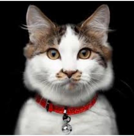 Cat Collar Stardust - Red Length:22-27cm Tot:30cm Width:1cm