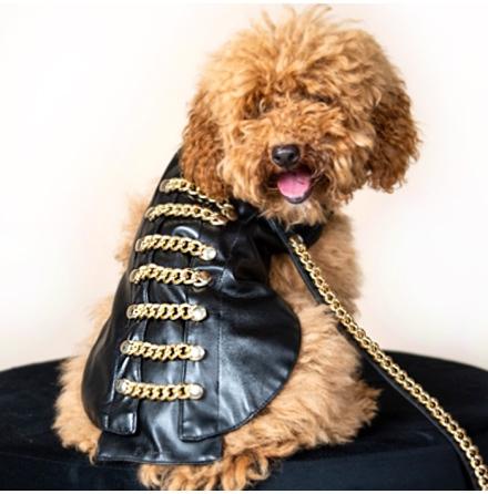 Golden Chains Pet Coat - Black/Gold  24cm
