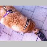 CRAZY CAT LADY - HARNESS